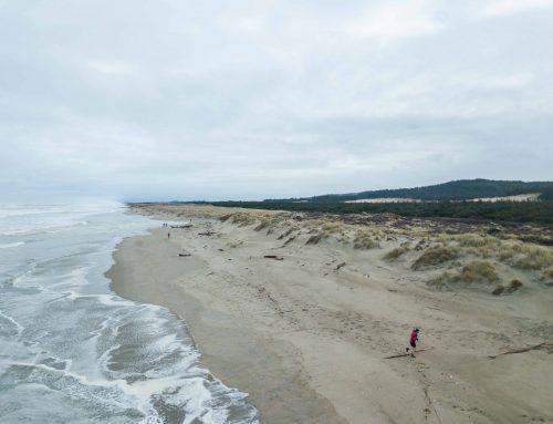 Siuslaw Dunes 50k Race Report