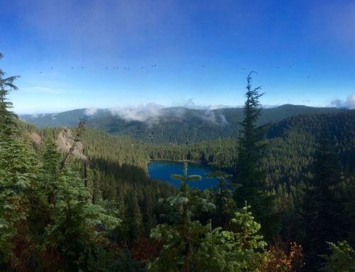Clackamas and Roaring River Wilderness Areas