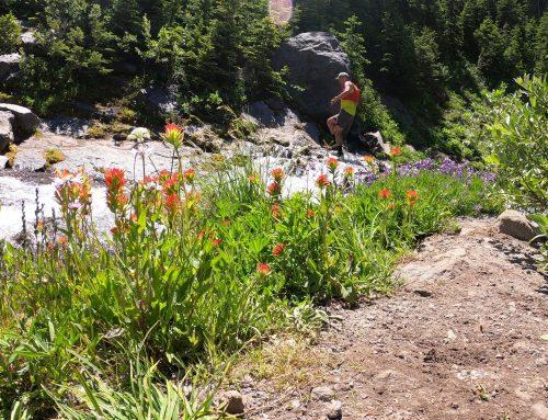 Mt. Hood Meadows Loop